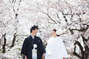 桜の和装前撮り・京都