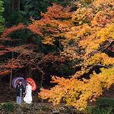 大原野神社で和装前撮り-06