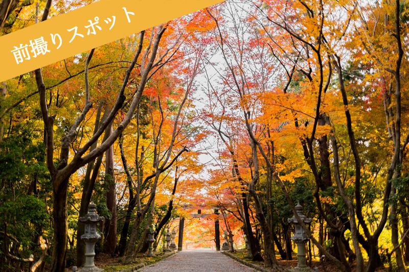 大原野神社のモミジ参道で前撮り