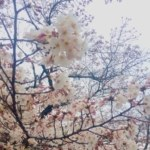 春のにおい