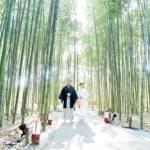 逆光を活かした竹林での撮影