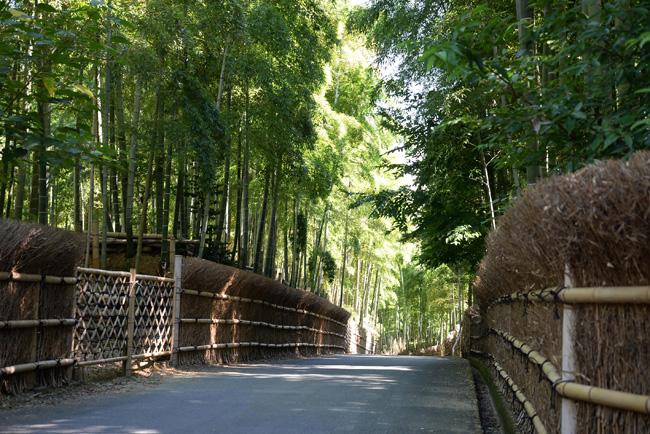 新しい前撮りのロケーション「竹林」