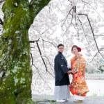 桂川沿いの桜と色打掛