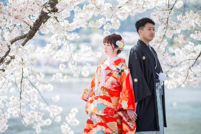 満開の桜咲く下で