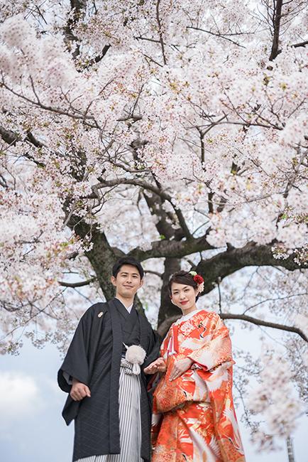まさに満開!見事な桜と和装!