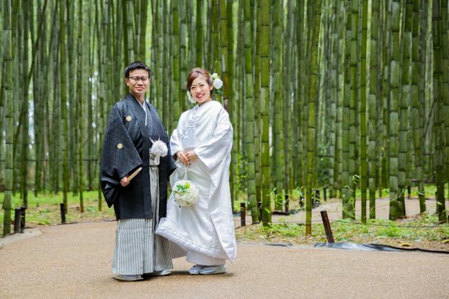 緑が生き生きとした竹林