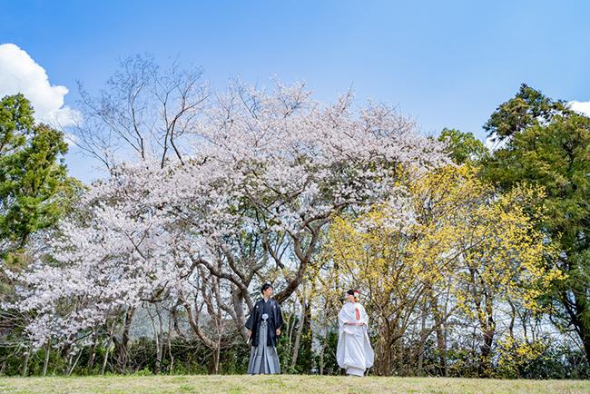 桜の下で和装前撮り